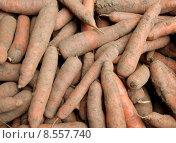 Купить «vegetable eco carrot ecological carrots», фото № 8557740, снято 19 июля 2019 г. (c) PantherMedia / Фотобанк Лори