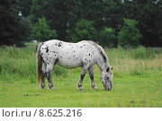 Купить «horse graze mold gelding willow», фото № 8625216, снято 24 мая 2018 г. (c) PantherMedia / Фотобанк Лори