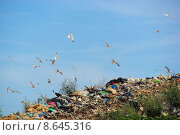 Купить «mull refuse landfill abfal deponie», фото № 8645316, снято 21 марта 2019 г. (c) PantherMedia / Фотобанк Лори