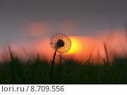 Купить «light bright sunset meadow evening», фото № 8709556, снято 15 сентября 2019 г. (c) PantherMedia / Фотобанк Лори