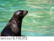 Купить «water animals zoo seal ringelrobbe», фото № 8718972, снято 19 июня 2019 г. (c) PantherMedia / Фотобанк Лори