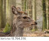 Купить «baby deer cub roe puppies», фото № 8764316, снято 19 октября 2019 г. (c) PantherMedia / Фотобанк Лори