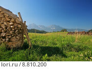 Купить «bavarian landscape with wood in the fron», фото № 8810200, снято 19 октября 2019 г. (c) PantherMedia / Фотобанк Лори