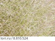 Купить «background of blades of grass in dayligh», фото № 8810524, снято 23 марта 2019 г. (c) PantherMedia / Фотобанк Лори