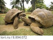 Купить «animals tortoises galapagos mauritius turtles», фото № 8894072, снято 19 июня 2019 г. (c) PantherMedia / Фотобанк Лори