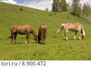 Купить «nature summer scenery countryside animals», фото № 8900472, снято 19 июня 2019 г. (c) PantherMedia / Фотобанк Лори