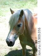 Купить «portrait horse mane pony gregarious», фото № 8909016, снято 26 марта 2019 г. (c) PantherMedia / Фотобанк Лори