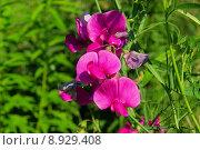 Купить «plant flower garden gardens blossoms», фото № 8929408, снято 16 июля 2018 г. (c) PantherMedia / Фотобанк Лори