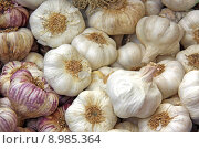 Купить «garlic ail allium aglio knoblauchzwiebel», фото № 8985364, снято 24 июня 2019 г. (c) PantherMedia / Фотобанк Лори