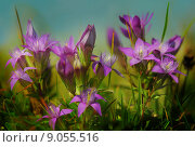 Купить «nature purple alps german gentian», фото № 9055516, снято 19 февраля 2019 г. (c) PantherMedia / Фотобанк Лори