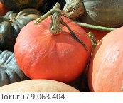 Купить «food healthy orange nutrition autumn», фото № 9063404, снято 27 июня 2019 г. (c) PantherMedia / Фотобанк Лори