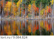 Купить «autumn fall foliage indian buzzer», фото № 9084824, снято 10 декабря 2018 г. (c) PantherMedia / Фотобанк Лори