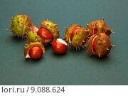 Купить «leaves bowl burst prickly chestnuts», фото № 9088624, снято 15 сентября 2019 г. (c) PantherMedia / Фотобанк Лори