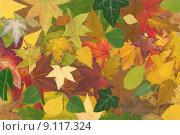 Купить «Leaf background», фото № 9117324, снято 15 сентября 2019 г. (c) PantherMedia / Фотобанк Лори