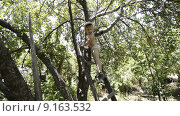 Купить «Маленький мальчик в саду залезает по лестнице, а затем спускается с неё», эксклюзивный видеоролик № 9163532, снято 31 июля 2015 г. (c) Алексей Бок / Фотобанк Лори