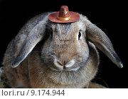 Купить «costume carnival rabbit rabbits sheriff», фото № 9174944, снято 27 июня 2019 г. (c) PantherMedia / Фотобанк Лори