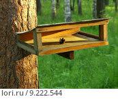 Кормушка для птиц в лесу. Стоковое фото, фотограф Нефедьев Леонид / Фотобанк Лори