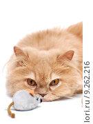 Купить «Persian cat stared at mouse», фото № 9262216, снято 6 декабря 2019 г. (c) PantherMedia / Фотобанк Лори