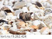 Купить «shells on the beach», фото № 9262424, снято 17 февраля 2019 г. (c) PantherMedia / Фотобанк Лори