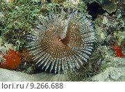 Купить «fish caribbean fauna dive rare», фото № 9266688, снято 20 октября 2019 г. (c) PantherMedia / Фотобанк Лори