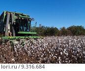 Купить «Cotton Picking», фото № 9316684, снято 13 августа 2018 г. (c) PantherMedia / Фотобанк Лори