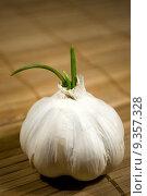 Купить «sprouting garlic», фото № 9357328, снято 19 сентября 2019 г. (c) PantherMedia / Фотобанк Лори