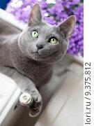 lying window cat lie heating. Стоковое фото, фотограф Nailia Schwarz / PantherMedia / Фотобанк Лори