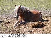 Купить «animal horse mane gelding palely», фото № 9386108, снято 21 марта 2019 г. (c) PantherMedia / Фотобанк Лори