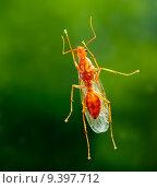 Купить «Male worker carpenter ant from below», фото № 9397712, снято 25 июня 2018 г. (c) PantherMedia / Фотобанк Лори