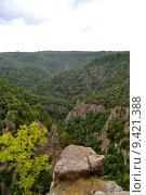 Купить «water tree forest river valley», фото № 9421388, снято 15 июля 2020 г. (c) PantherMedia / Фотобанк Лори