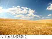 Купить «nature ripe grain cereal eco», фото № 9457540, снято 20 июля 2019 г. (c) PantherMedia / Фотобанк Лори