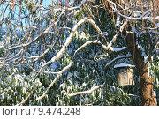 Купить «park winter cold snow aviary», фото № 9474248, снято 17 июня 2019 г. (c) PantherMedia / Фотобанк Лори