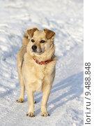 Купить «cute winter cold snow dog», фото № 9488848, снято 17 июня 2019 г. (c) PantherMedia / Фотобанк Лори