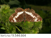 Купить «animal insect butterfly moth kingfishers», фото № 9544664, снято 15 октября 2019 г. (c) PantherMedia / Фотобанк Лори