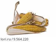 Купить «Maize ears isolated over white.», фото № 9564220, снято 15 декабря 2018 г. (c) PantherMedia / Фотобанк Лори