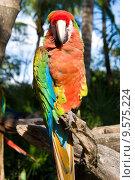 Купить «Colorful parrot», фото № 9575224, снято 22 марта 2019 г. (c) PantherMedia / Фотобанк Лори