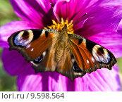 Купить «insect dahlia nature plant flower», фото № 9598564, снято 15 октября 2019 г. (c) PantherMedia / Фотобанк Лори