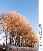Купить «Winter tree», фото № 9622800, снято 21 октября 2018 г. (c) PantherMedia / Фотобанк Лори