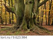 Купить «book trunk beech forest buchengruppe», фото № 9623984, снято 15 июля 2020 г. (c) PantherMedia / Фотобанк Лори