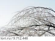 Купить «Icy tree branches», фото № 9712448, снято 17 июня 2019 г. (c) PantherMedia / Фотобанк Лори