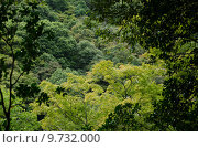 Купить «Forest canopy as seen from a mountain slope», фото № 9732000, снято 21 ноября 2019 г. (c) PantherMedia / Фотобанк Лори