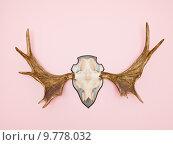 Купить «Moose Horn», фото № 9778032, снято 18 февраля 2019 г. (c) PantherMedia / Фотобанк Лори