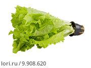 Купить «Fresh green lettuce», фото № 9908620, снято 18 июля 2019 г. (c) PantherMedia / Фотобанк Лори