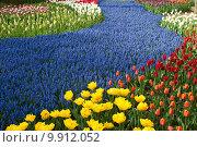 Купить «Яркие цветущие тюльпаны на клумбе», фото № 9912052, снято 29 апреля 2015 г. (c) Наталья Быстрая / Фотобанк Лори