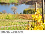 Купить «autumn fall indian vineyard buzzer», фото № 9938640, снято 10 декабря 2018 г. (c) PantherMedia / Фотобанк Лори
