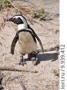 Купить «coast penguin colony south africa», фото № 9939412, снято 19 декабря 2018 г. (c) PantherMedia / Фотобанк Лори