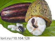 Купить «fruit of the cocoa tree », фото № 10104128, снято 26 марта 2019 г. (c) PantherMedia / Фотобанк Лори