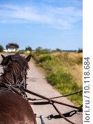 Купить «horse coach horses harness horsepower», фото № 10118684, снято 16 декабря 2017 г. (c) PantherMedia / Фотобанк Лори