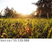 Капли росы в рассветных лучах. Стоковое фото, фотограф Тимофеева Алина / Фотобанк Лори