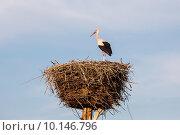 Купить «Белый аист на гнезде (Ciconia ciconia)», фото № 10146796, снято 13 августа 2015 г. (c) Ирина Яровая / Фотобанк Лори